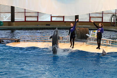 Dolphin Show - National Aquarium In Baltimore Md - 121299 Poster by DC Photographer