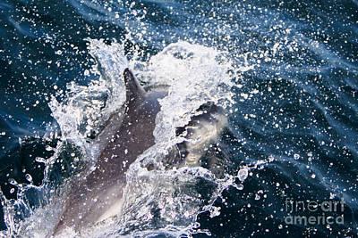 Dolphin Splash Poster