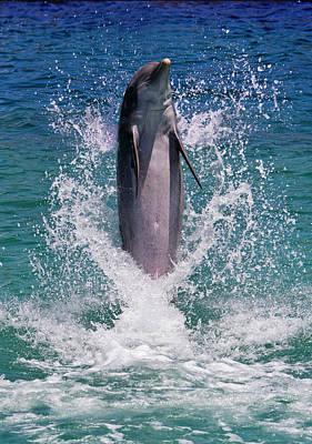 Dolphin Standing Above Water, Roatan Poster by Keren Su