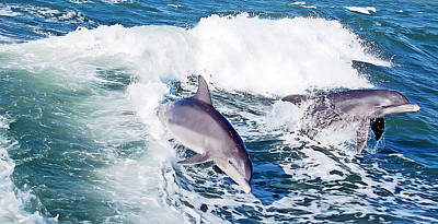 Dolphins Jumping Poster by Aimee L Maher Photography and Art Visit ALMGallerydotcom