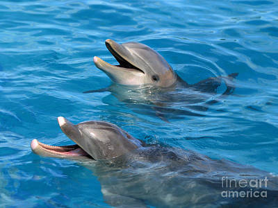 Poster featuring the photograph Dolphins by Kristine Merc