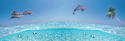 Dolphins Leaping In Air Poster