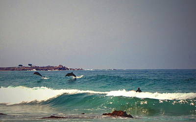 Dolphins Swimming With The Surfers At Asilomar State Beach  Poster