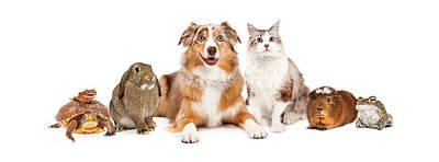 Domestic Pet Composite Poster by Susan Schmitz