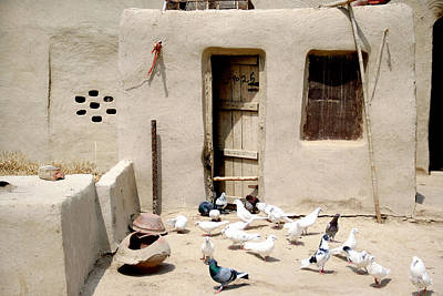 Domestic Pigeons In Mud House Poster by Iftikhar Ahmed