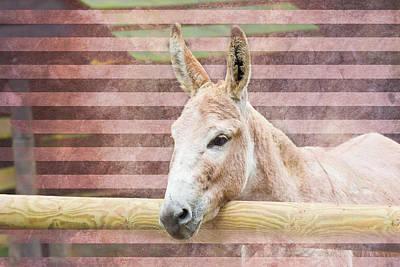 Donkey Poster by Pati Photography