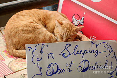 Dont Disturb - Sleeping Cat Poster by Dean Harte