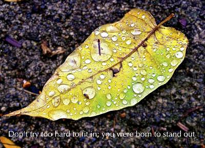 Don't Try Too Hard To Fit In You Were Born To Stand Out Poster