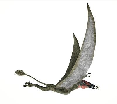 Dorygnathus Dinosaur Poster