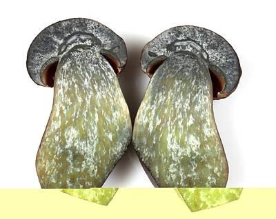 Dotted Stem Bolete (boletus Erythropus) Poster