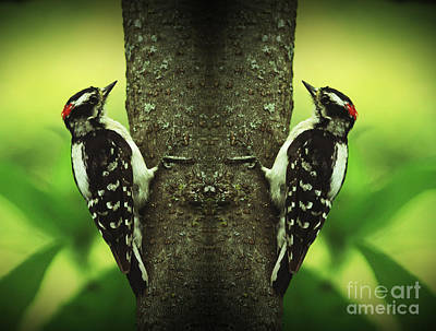 Double Pleasure- Woodpeckers Poster by Inspired Nature Photography Fine Art Photography