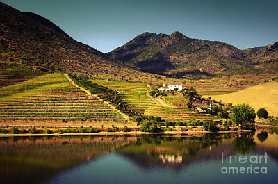 Douro Landscape Iv Poster by Carlos Caetano