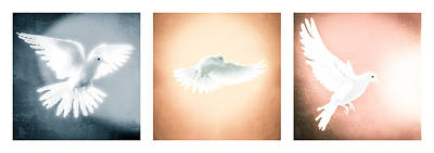 Dove In Flight Triptych Poster