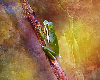 Down In The Swamp Tree Frog Poster by J Larry Walker