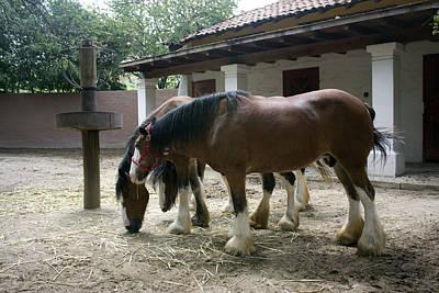 Draft Horses Poster by Lynn Palmer