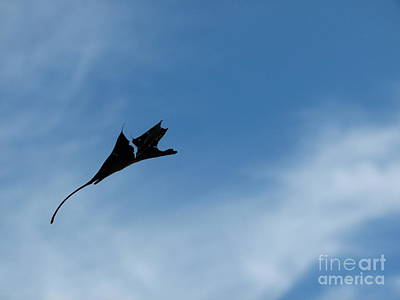 Poster featuring the photograph Dragon In Flight by Jane Ford