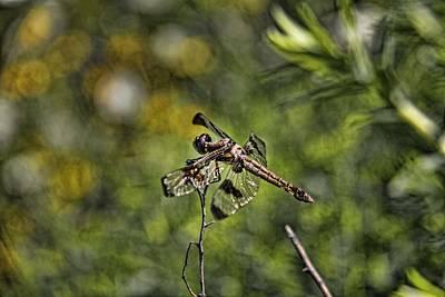 Dragonfly Poster by Daniel Sheldon