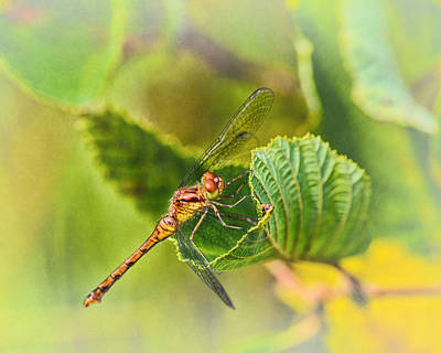 Dragonfly Days II Poster by Susan Capuano