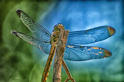 Poster featuring the photograph Dragonfly by Dennis Baswell