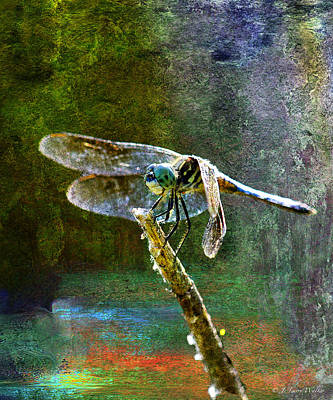 Dragonfly  Poster by J Larry Walker