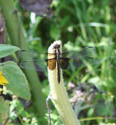 Poster featuring the photograph Dragonfly by Karen Silvestri