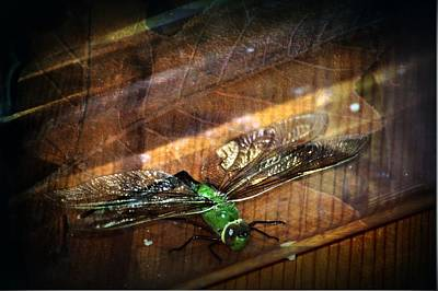 Dragonfly Macro 4 Poster by Dawna Morton