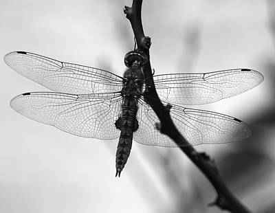 Dragonfly Mosaic Poster