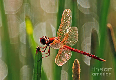 Dragonfly Profile Poster