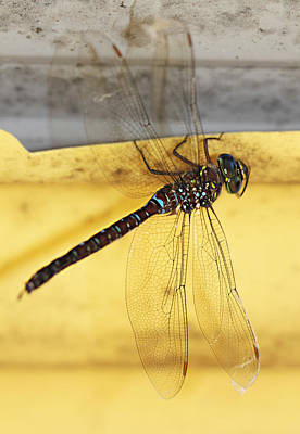 Poster featuring the photograph Dragonfly Web by Melanie Lankford Photography