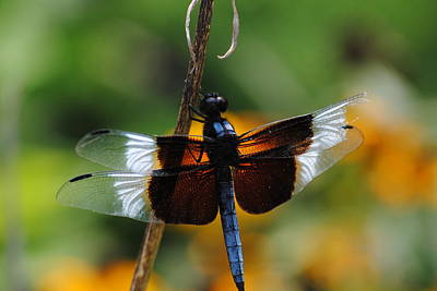 Poster featuring the photograph Dragonfly Zoom by Robert  Moss