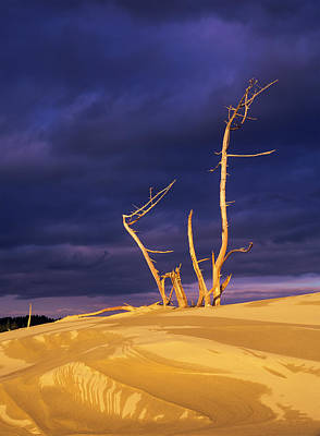 Dramatic Light Strikes The Sand Dunes Poster by Robert L. Potts