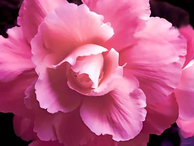 Dramatic Pink Begonia Floral Poster