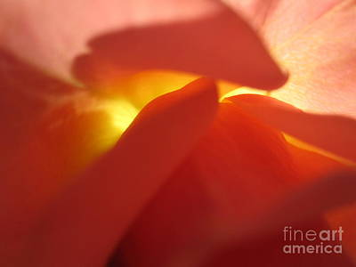 Glowing Orange Rose 2 Poster by Tara  Shalton
