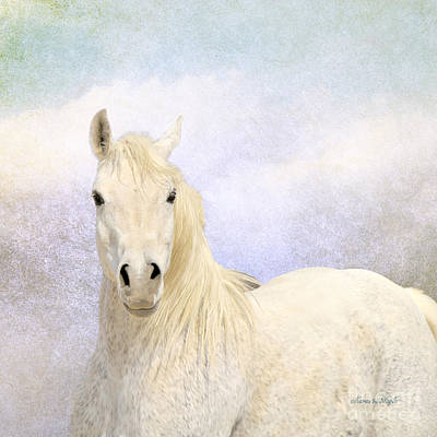 Poster featuring the photograph Dream Horse by Karen Slagle