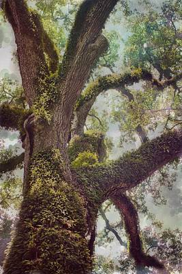 Dreamer's Oak Poster by Maria Robinson