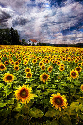 Dreaming Of Sunflowers Poster by Debra and Dave Vanderlaan