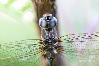 Dreaming With A Dragonfly Poster by Scotts Scapes