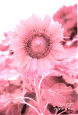 Dreamy Pink Cottage Chic Surreal Sunflower Poster by Kathy Fornal