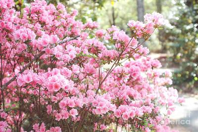 Dreamy Pink South Carolina Apple Blossom Trees - South Carolina Spring Pink Blossoms Tree Poster by Kathy Fornal