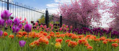 Dreamy Tulip Garden Poster