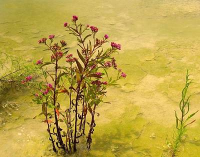 Dredge Basin Bouquet Poster by Laura Ragland