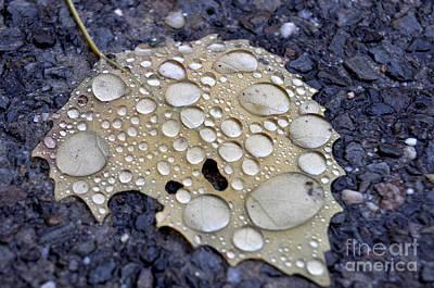 Drenched Leaf Poster
