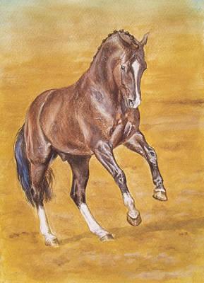 Dressage Stallion -bay Horse Poster