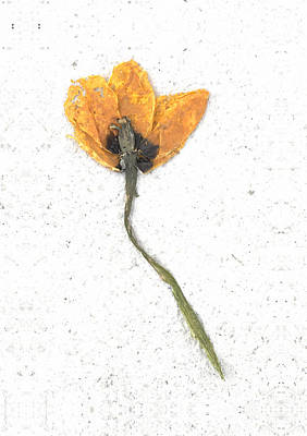 Dried Flower Poster by Igor Baranov
