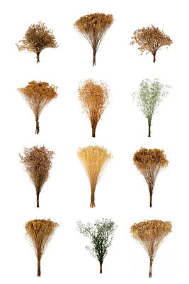 Dried Flowers Collection Poster by Olivier Le Queinec