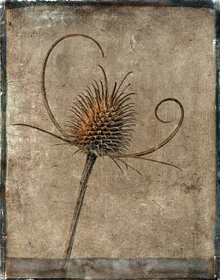 Dried Thistle Poster by Robert Jensen