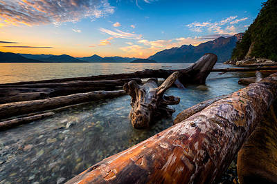 Driftwood Poster by Alexis Birkill
