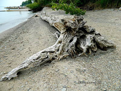 Driftwood At Lake Erie Poster by Kathy Barney