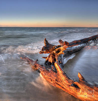 Driftwood At Whitefish Point Poster by Twenty Two North Photography