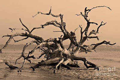Driftwood Beach Jekyll Island Poster
